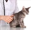 Ветеринарные клиники в Амзе